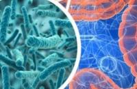Microbiota intestinale: ecco come condiziona la risposta all'immunoterapia